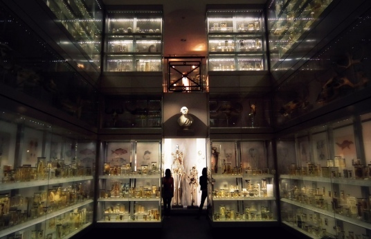 hunterian-museum-image-1
